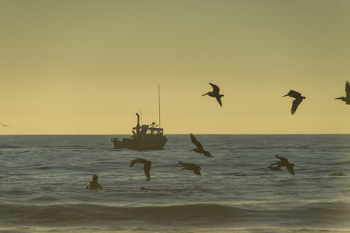 USA, California, Del Mar, Fishing boat in the evening flying birds in the foreground - RUNF01128