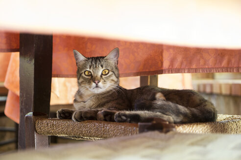 Cat lying on chair under table - MAMF00389