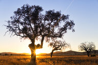 Spain, Holm oak at sunset, Natural Park Villafafila - DSGF01833