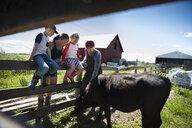 Family farmers watching cow on sunny farm - HEROF20685
