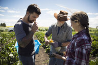 Farmers examining and smelling harvested vegetables on sunny farm - HEROF20709
