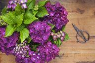 Bouquet of purple hydrangeas - GWF05868