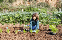 Boy planting lettuce seedlings in vegetable garden - GEMF02745