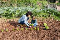Mother and son planting lettuce seedlings in vegetable garden - GEMF02748