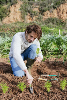 Man planting lettuce seedlings in vegetable garden - GEMF02766