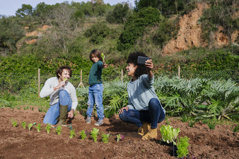 Family taking selfies of planting lettuce seedlings in an vegetable garden - GEMF02769