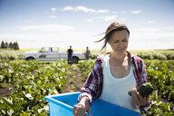 Female farmer examining harvested zucchini on sunny farm - HEROF20924