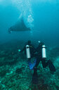 Scuba divers watching Manta ray, Tulamben, Bali, Indonesia - ISF20892