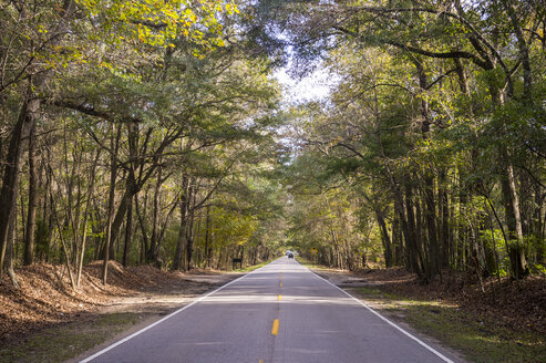 USA, South Carolina, Charleston, Oak trees and road, Magnolia Plantation - RUNF01229