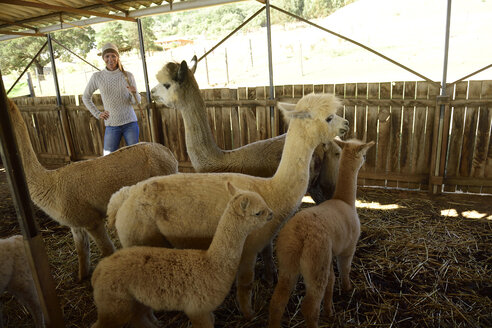 Mature woman working at alpaca stable - ECPF00509