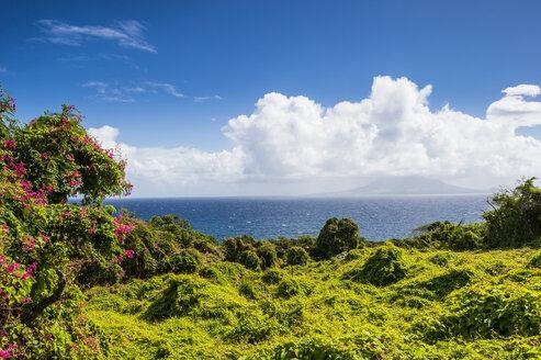 Caribbean, Netherland Antilles, St. Eustatius, Lush vegetation - RUNF01250