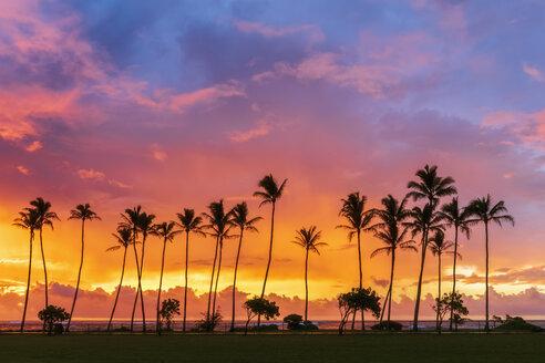 USA, Hawaii, Kauai, Pacific Ocean, Kapa'a Beach Park, palms at sunrise - FOF10416