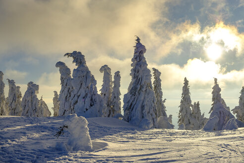 Germany, Bavaria, Bavarian Forest in winter, Great Arber, Arbermandl, snow-capped spruces at sunset - LBF02372