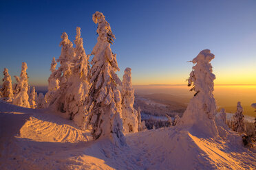 Germany, Bavaria, Bavarian Forest in winter, Great Arber, Arbermandl, snow-capped spruces at sunset - LBF02375