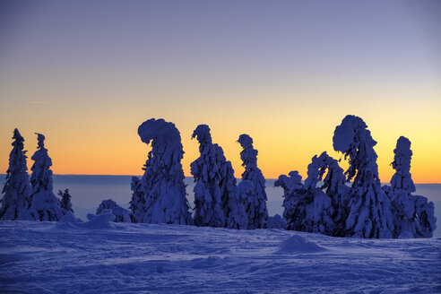Germany, Bavaria, Bavarian Forest in winter, Great Arber, Arbermandl, snow-capped spruces at sunset - LBF02378