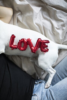 Woman and dog on bed with love foil balloon - JPF00352