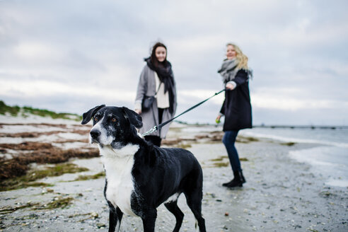 Woman holding leash of dog while standing with friend on beach - ASTF04460