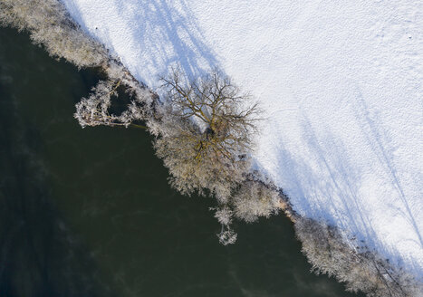 Tree at Loisach river in winter - LHF00599