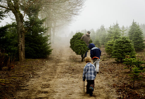 Rear view of father with sons carrying pine trees while walking on dirt road at farm during foggy weather - CAVF60641