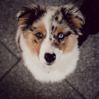 High angle portrait of dog standing on tiled floor - CAVF60713