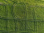 Aerial view of green agricultural field during sunny day - CAVF60749