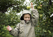 Playful boy wearing raincoat dropping apple on head against fruit trees at orchard - CAVF60993