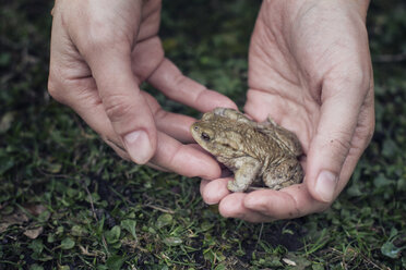 Close-up of woman holding European toad in hand - MAMF00446
