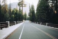 Empty road amidst trees in forest at Kings Canyon National Park - CAVF61233