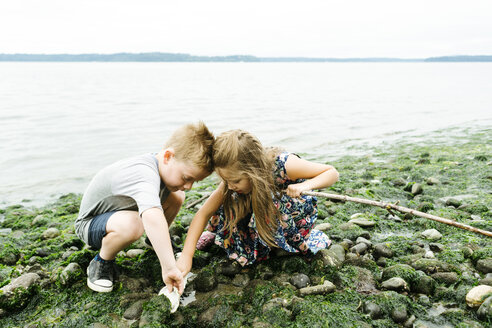 Siblings searching seashells while crouching on rocks at beach against clear sky - CAVF61443