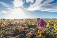 Girl picking pumpkin while standing at organic farm against sky during sunny day - CAVF61566