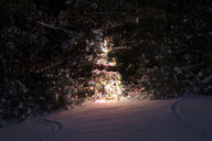Illuminated Christmas tree on snow covered field in forest at night - CAVF61584