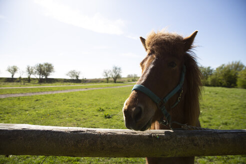 Close-up of horse standing by fence on field against sky during sunny day - CAVF61595
