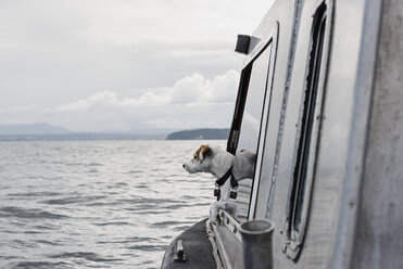 Cute dog looking out boat window onto river, Campbell River, British Columbia, Canada - CAIF22890