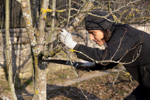 Pruning of tree with handsaw - NDF00861