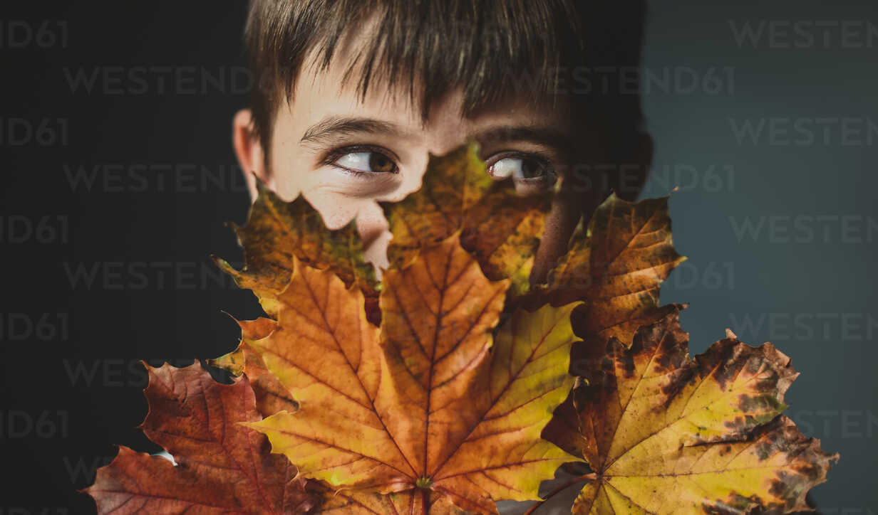 Close-up of boy looking away while covering face with autumn leaves against colored background - CAVF61752 - Cavan Images/Westend61