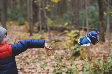Happy cute boy feeding seeds to blue jay at forest - CAVF61761
