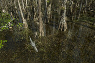 High angle view of trees and alligator in swamp at forest - CAVF61872