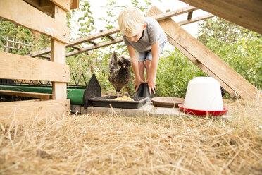 Boy feeding chicken at chickenhouse in garden - MFRF01250