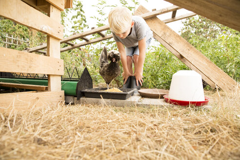 Boy feeding chicken at chickenhouse in garden - MFRF01250