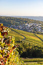 Germany, Baden-Wuerttemberg, Stuttgart, view over grapevines to Uhlbach - WDF05182