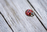High angle view of ladybug on wooden table - CAVF62160