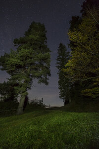 Germany, Bavaria, Allgaeu, Auerberg, trees under starry sky at night - DLF00039