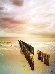 Belgium, Flanders, North Sea, wooden groynes - GWF05919