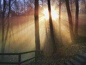Germany, Rhineland Palatinate, Palatinate Forest, sun beams in foggy forest, hiking trail - GWF05931
