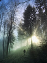 Germany, Rhineland Palatinate, Palatinate Forest, man walking and relaxing in foggy mystic forest with sunbeams - GWF05940