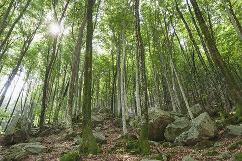 Switzerland, Ticino, Verzasca Valley, rocks in forest - GWF05962