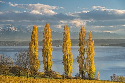 Germany, Baden-Wuerttemberg, Birnau, Lake Constance, Poplars and Saentis in autumn - SH02057