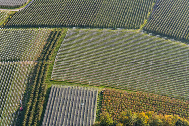 Germany, Aerial view of orchards near Ailingen - SH02078