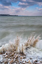 Germany, Baden-Wuerttemberg, Lake Constance, Constance, frozen shore vegetation and clouds in icy easter wind - SH02094