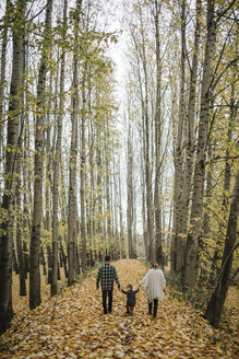 Rear view of parents and son walking amidst tree trunks in forest during autumn - CAVF62800